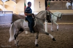 A Lusitano and future star of Apassionata at Luis Valença's Riding Academy, Villa Franca Xira, Portugal