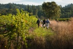 Barbier_Farm_Vineyard_Harvest_0885