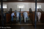They keep the old ways with the standing stalls at Quinta da Broa